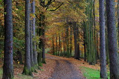 Autumn Forest Road Images stock