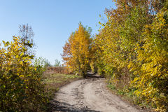 Autumn Forest Road Lizenzfreies Stockfoto