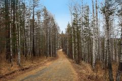 Autumn forest and the road in Abzakovo resort, Russia stock photography