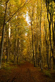 Autumn forest. Road in a beautiful autumn afternoon Royalty Free Stock Images