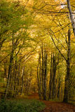 Autumn forest. Road in a beautiful autumn afternoon Royalty Free Stock Image