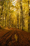 Autumn forest. Road in a beautiful autumn afternoon Stock Photo