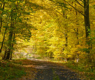 Autumn forest and road Stock Photo