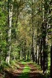 Autumn Forest Road Bladträd runt om vägen Arkivbild
