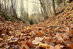 Autumn forest road covered with leaves.  Stock Photos