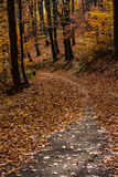 Autumn forest. Road in the autumn forest covered in orange and yellow fallen leaves Stock Photography