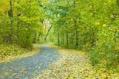 Autumn forest road. Covered with yellow leaves Royalty Free Stock Photos