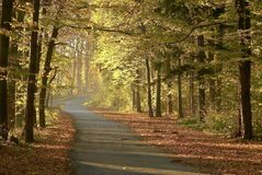 Autumn forest road with early morning sun rays royalty free stock photography