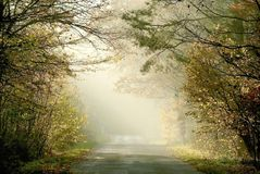 Autumn forest road with early morning sun rays Stock Image