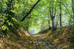 Autumn forest road Royalty Free Stock Images