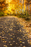 Autumn forest road with gold leaves - landscape Stock Photography