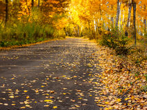 Autumn forest road with gold leaves - landscape Stock Photos
