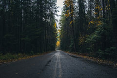 Autumn forest road. Image of an autumn forest road stock image