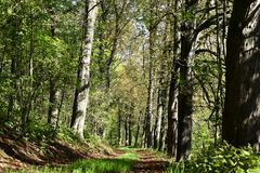 Autumn forest road. Leaf trees around the road. Landscape Royalty Free Stock Photography