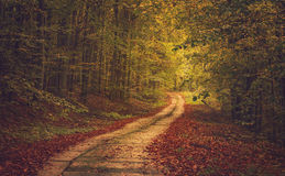 Autumn Forest Road Royalty Free Stock Photos