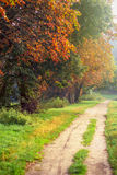 Autumn forest road. Royalty Free Stock Photography