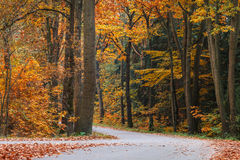 Autumn forest road in The Netherlands Stock Image