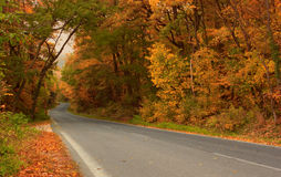 Autumn forest road. Autumn road forest orange color woods Royalty Free Stock Photos