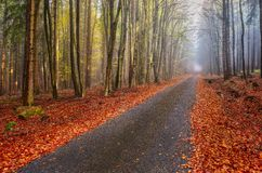 Autumn forest road. Path between beech trees in autumn forest Royalty Free Stock Image