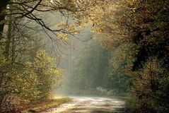 Autumn forest road in the rays of light stock photo