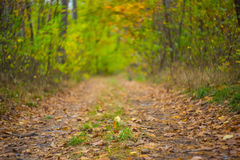 Autumn forest road scene Royalty Free Stock Image