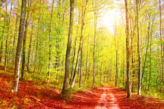 Autumn forest road Royalty Free Stock Image