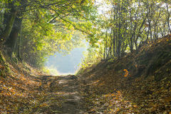 Autumn forest road Royalty Free Stock Photography