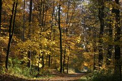 Autumn forest road 01. Road through the forest on a sunny autumn day. Vibrant colors of leaves royalty free stock photo