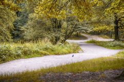 Autumn forest. And road with trees Stock Image