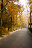 The autumn forest road Royalty Free Stock Photo