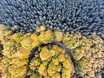 Autumn Forest Road trough the woods in Fall season. Aerial view Royalty Free Stock Images