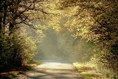 Autumn Forest Road With Early Morning Sun Rays Stock Photography