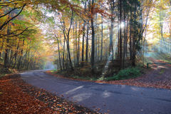 Autumn forest road in the woods Stock Photo