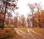 Autumn forest road. Autumn yellow forest dirt road Royalty Free Stock Photo