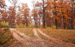 Autumn forest road. Autumn yellow forest dirt road Stock Photo