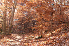Autumn forest in Rock Creek Park, Washington DC - United States Royalty Free Stock Photos