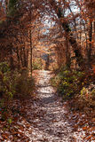 Autumn forest in Rock Creek Park, Washington DC - United States Royalty Free Stock Photo