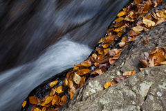 Autumn forest rocks creek. Autumn forest creek on the rock surface among yellow leafs Stock Photos