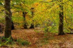 Autumn Forest rougeoyant Photo libre de droits