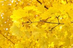 Autumn forest scene Stock Photos