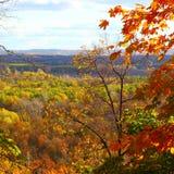 Autumn forest scene stock photography