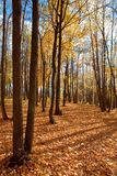 Autumn forest scene Stock Photography