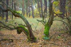 Autumn forest scene Stock Image