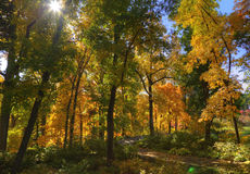 Autumn Forest Scene Stock Image