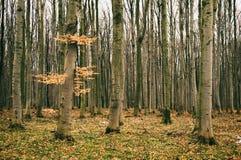 Autumn forest scene woodland Stock Photos