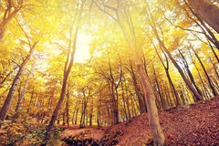 Autumn in the forest. Stock Images