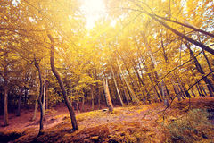 Autumn in the forest. Stock Image