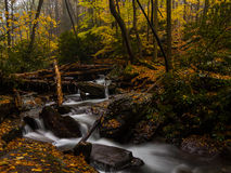 Autumn forest with rushing stream Stock Photos