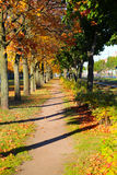 Autumn park scenery Royalty Free Stock Image