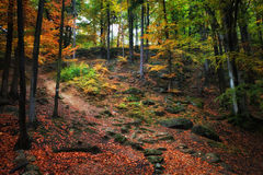 Autumn Forest Scenery Royalty Free Stock Photo